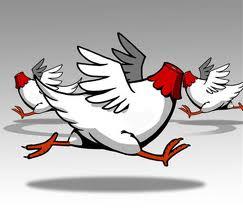 headless-chicken