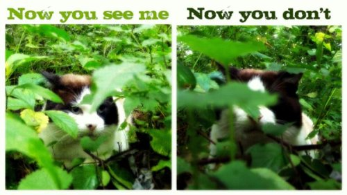 now-you-see-me-now-you-dont-cat
