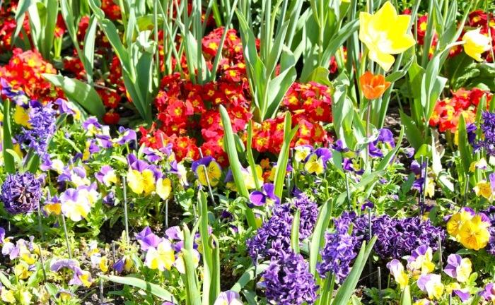 Hyde Park flowers-taken April 10, 2011