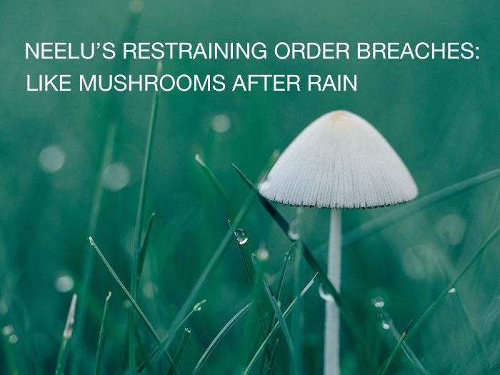 mushroom-after-rain