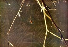 13195-a-spider-in-the-center-of-a-web-pv