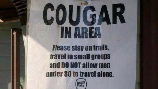 beware-of-cougar