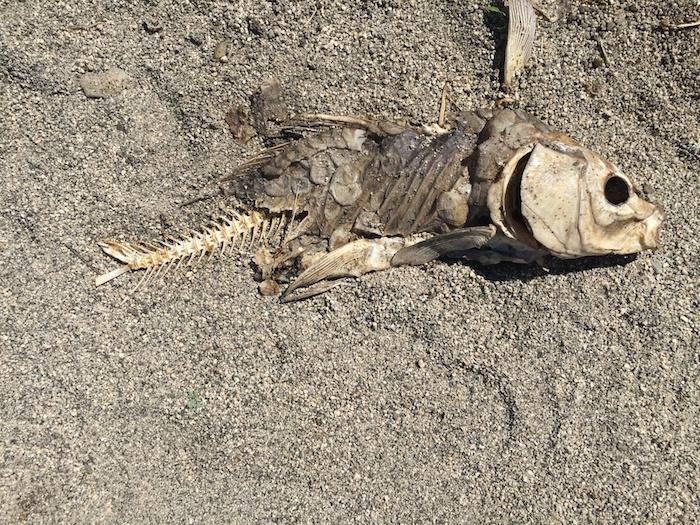 rotten-carcass