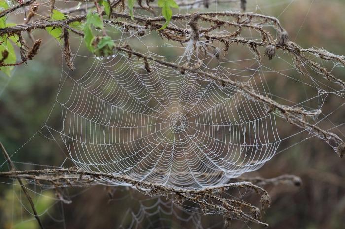 spider-web-1729190_960_720