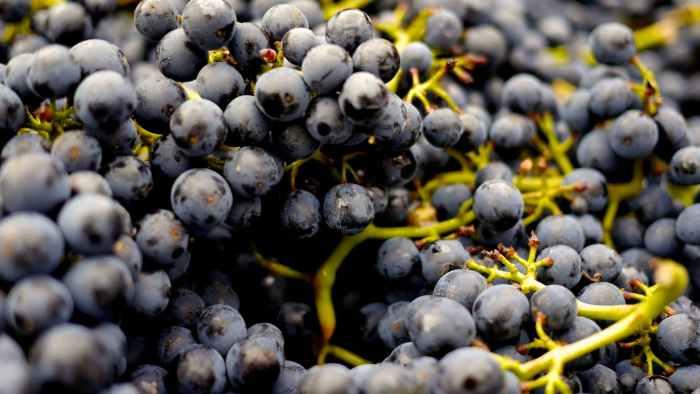 abundance alcohol berries berry